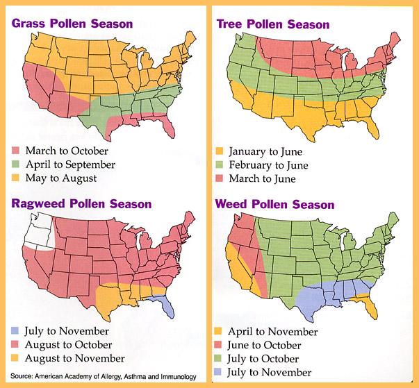 アメリカ 花粉症